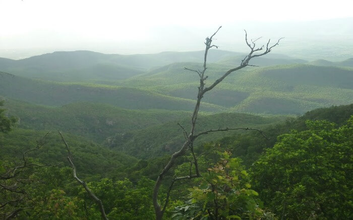 a view of lush green hills Nagari hills