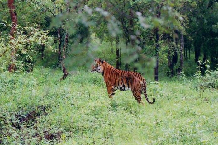 brahmagiri-wildlife-sanctuary-kodagu