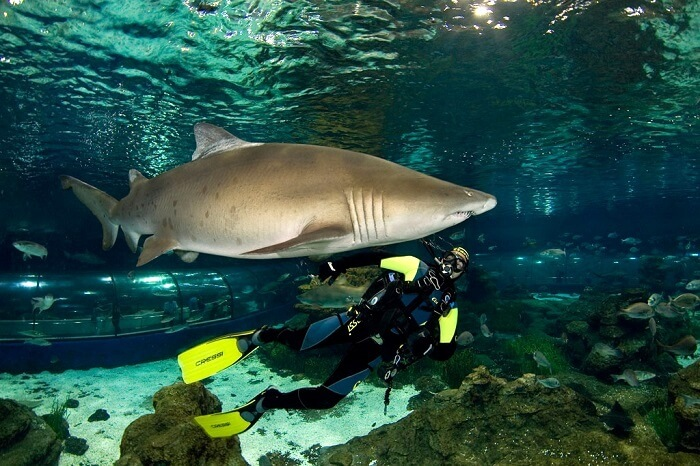 diving with sharks barcelona