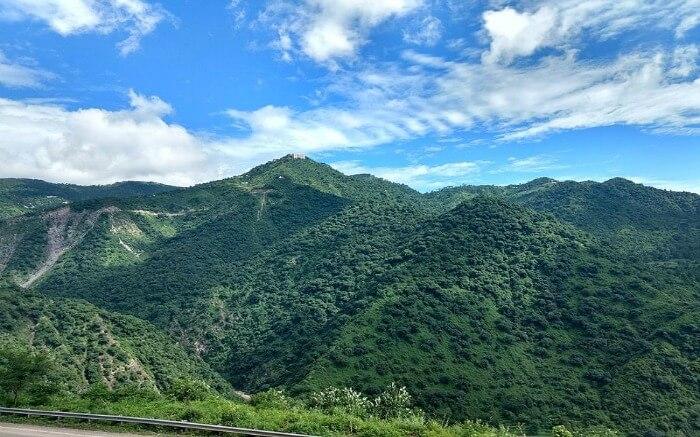 beautiful green hills of Parwanoo
