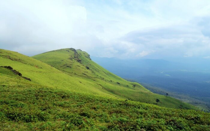 green meadows in Chikmagalur