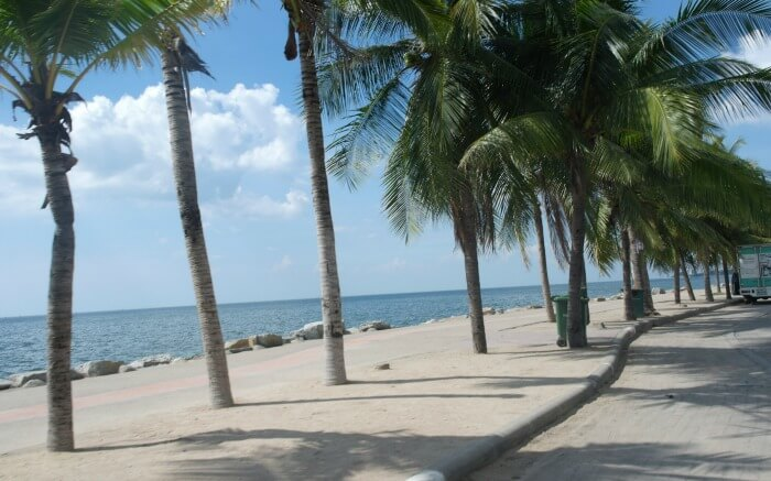 palm trees on the beach of Bang Saen