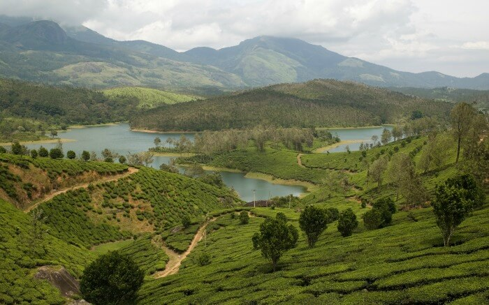 tea gardens and a lake in Yelagiri