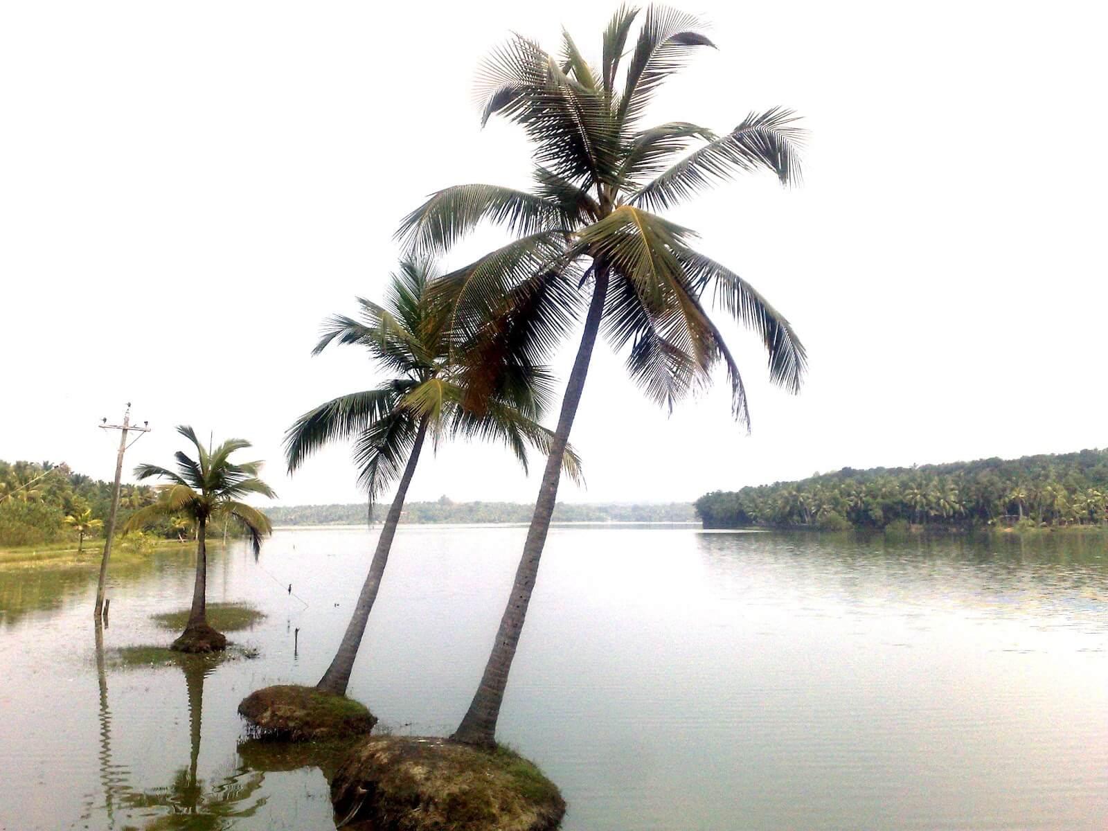 Vellayani Lake in Kovalam