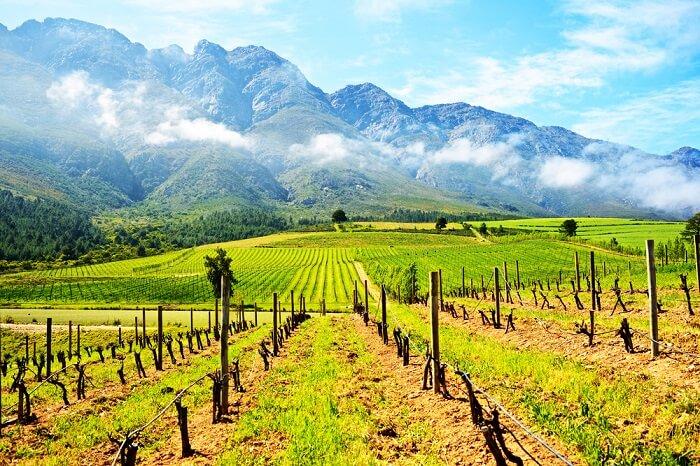 Cape Winelands in Africa