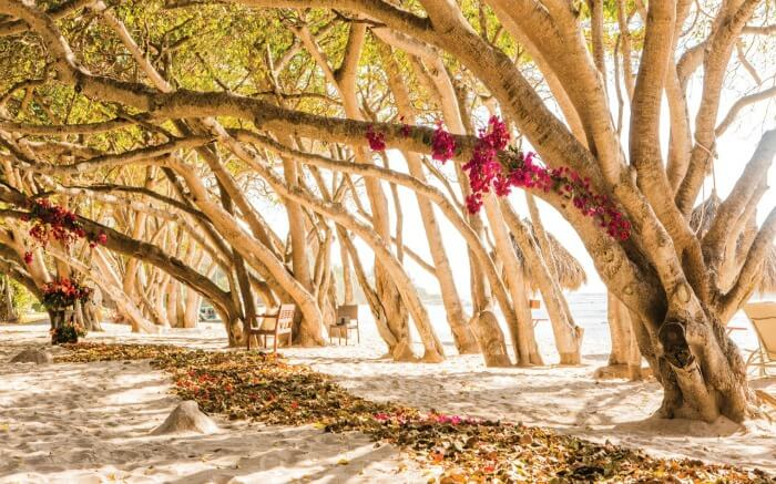 A romantic photoshoot set up outside the Four Seasons in Mexico in autumn