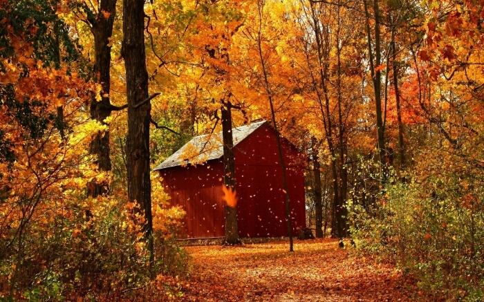 A secluded cottage surrounded by autumn leaves in Venezuel