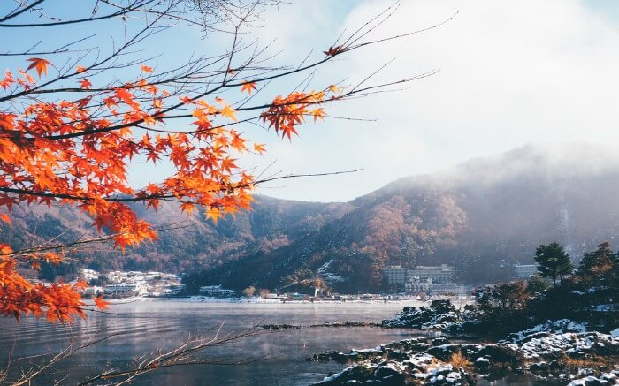Beautiful maple tree leaf as seen by the river side in Japan in autumn