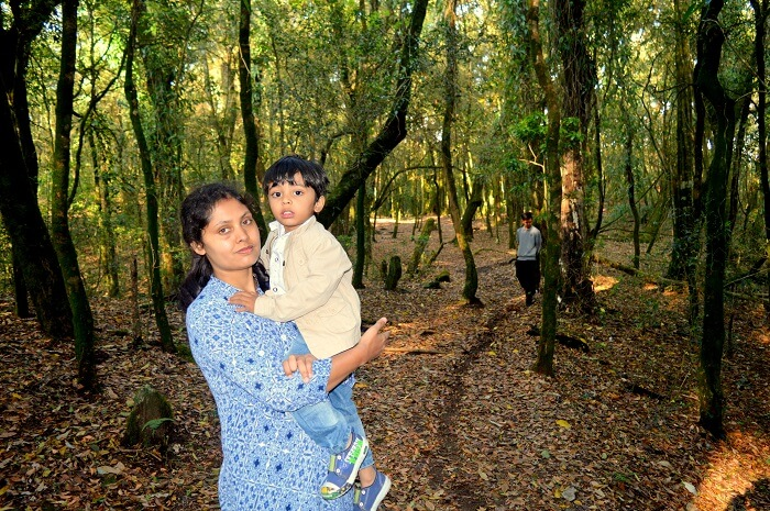 sacred forest in shillong