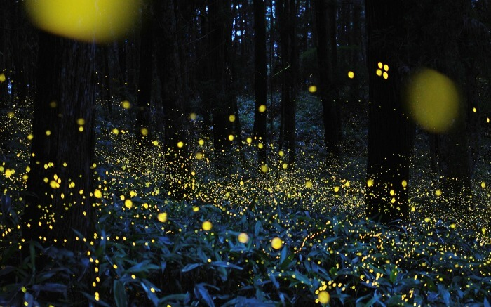 Fireflies in the jungle at night
