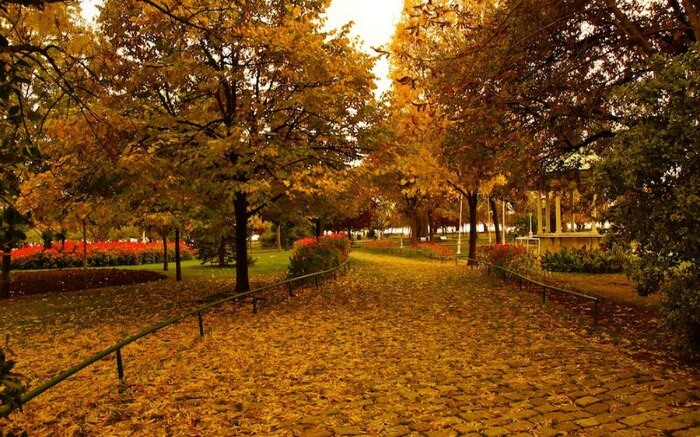 Golden leaves decorating the pathway in Istanbul in autumn