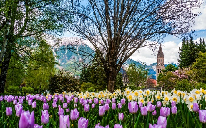 Flowers in Innsbruck