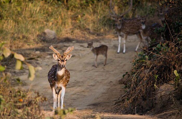 Jim Corbett National Park wil Animal
