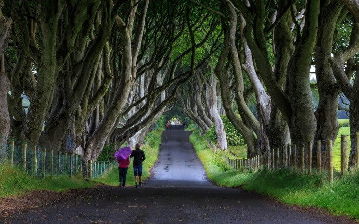 People walking across The Dark Hedge in Ireland