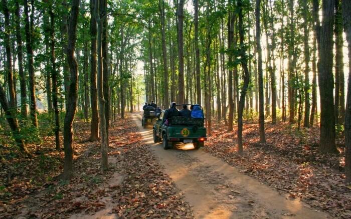 Tourists taking a jeep safari through Kanha National Park