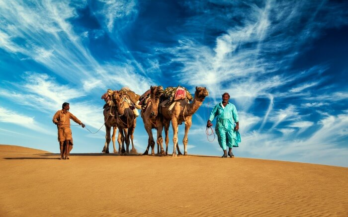 Two Rajasthani men with their camels in Thar Desert
