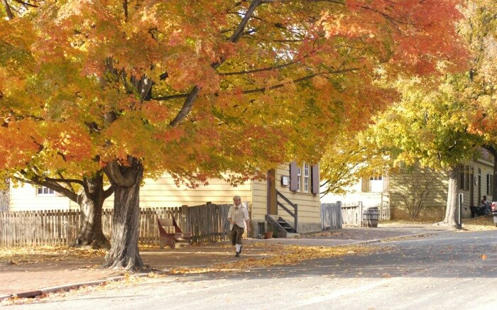 a man walking under a yellow tree in autumn in a small town