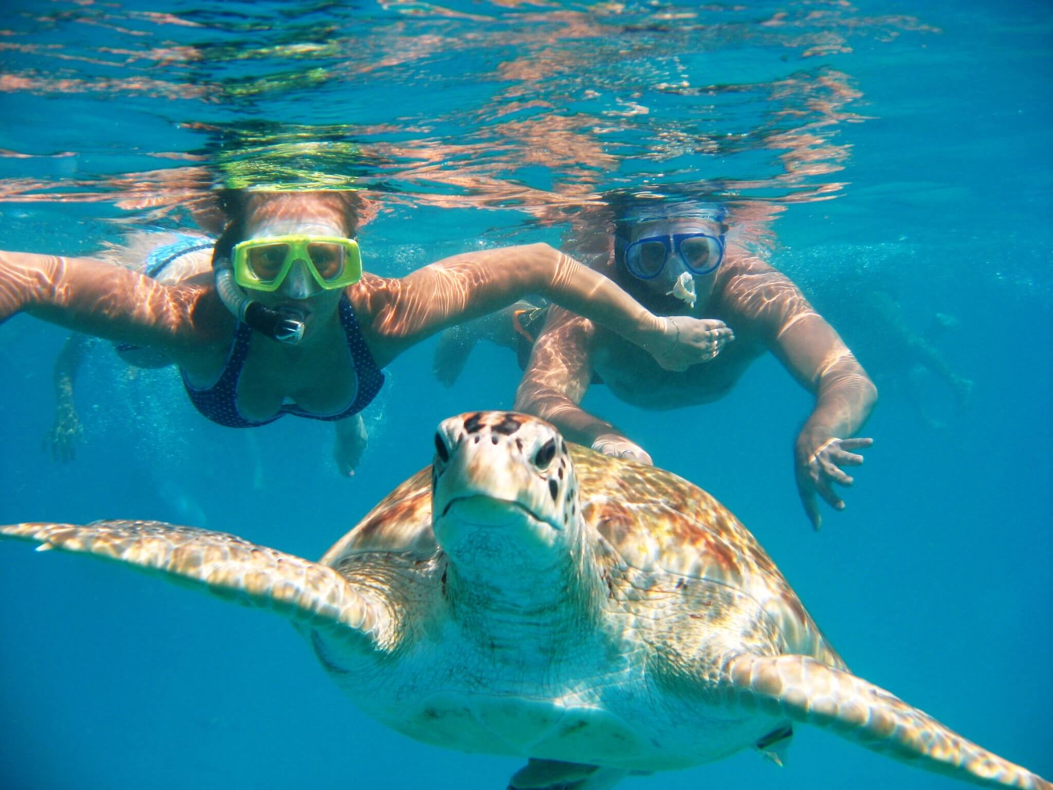 a couple snorkeling with a turtle