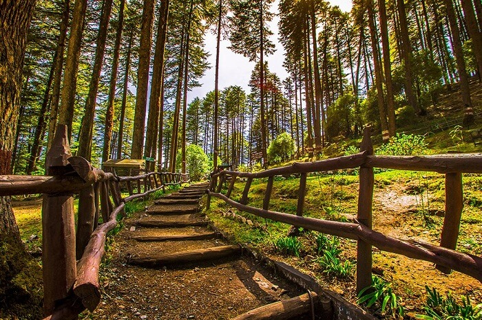 A beautiful shot of the forest trail in Dhanaulti