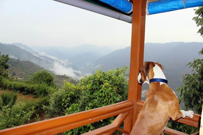 A dog in a balcony of a hotel in mountains