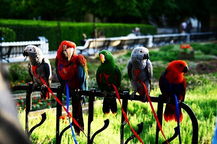 Jurong Bird Park, Singapore