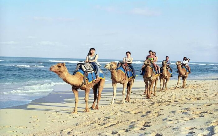 A group of tourists taking a camel safari on beach