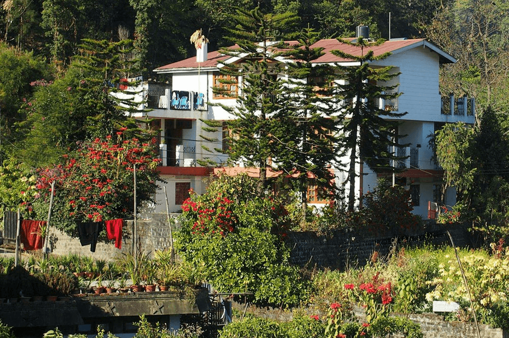 a homestay covered by deodar trees
