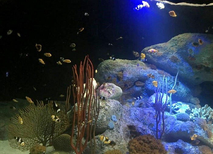aquarium in underwater world