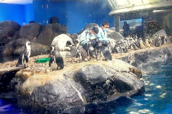 penguins in underwater world