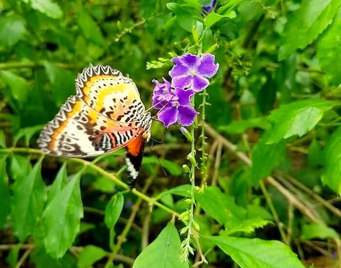 nature in penang