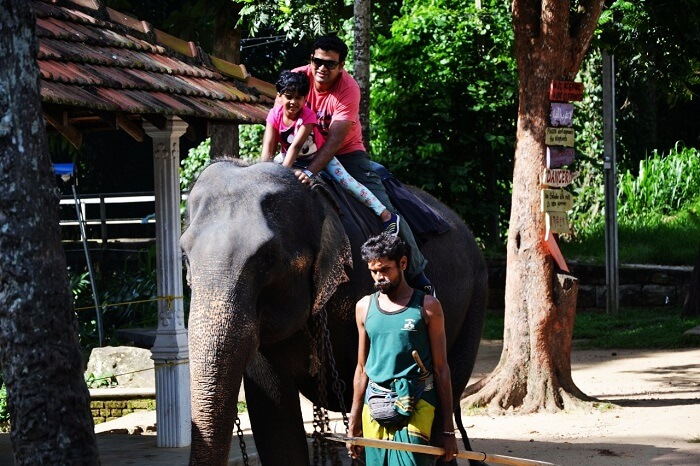 elephant ride in Sri Lanka