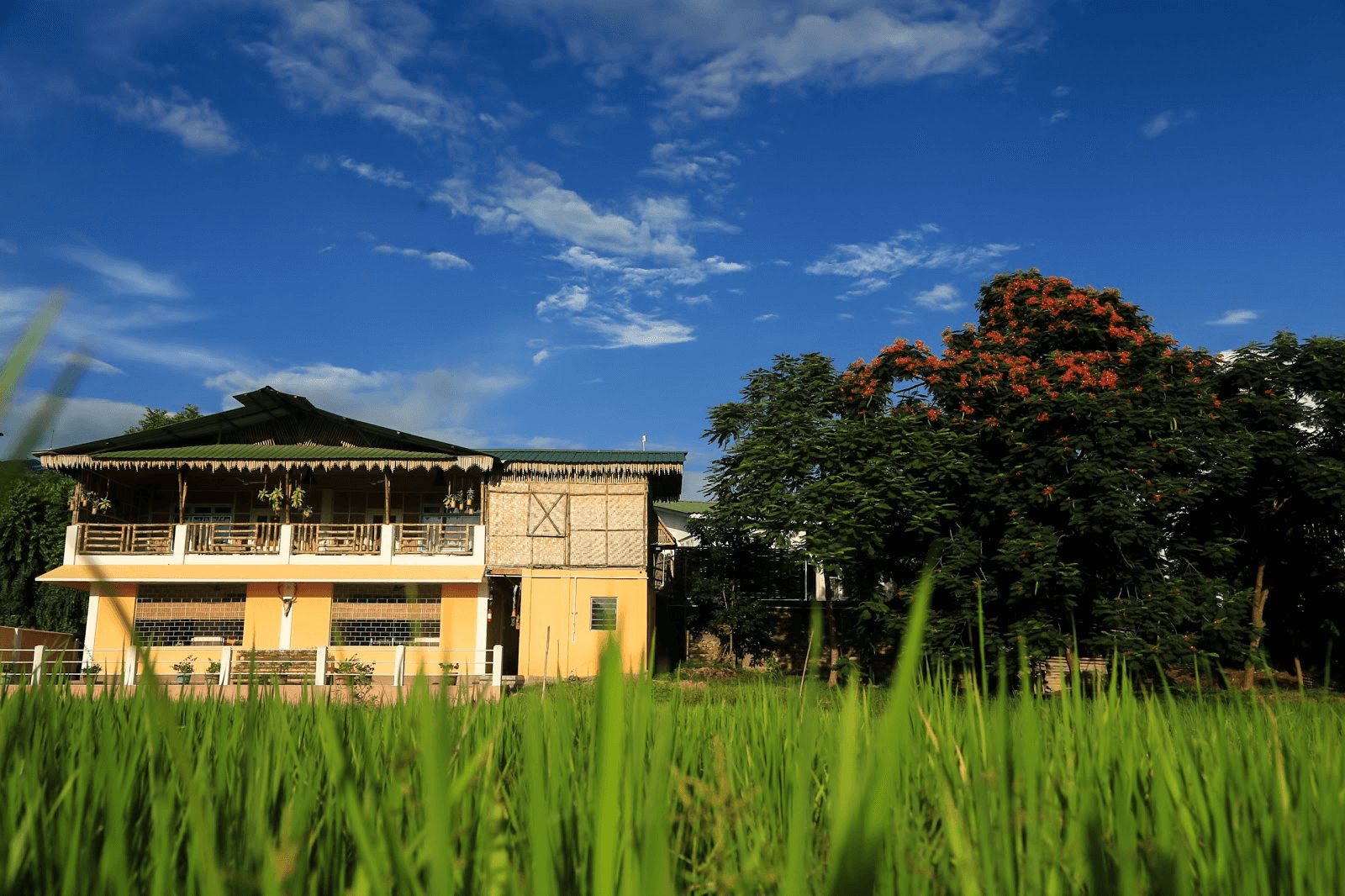 a homestay in the middle of rice fields
