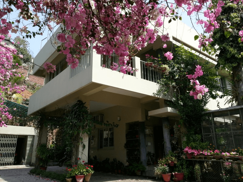 bougainvillea flowers in the premises of a homestay