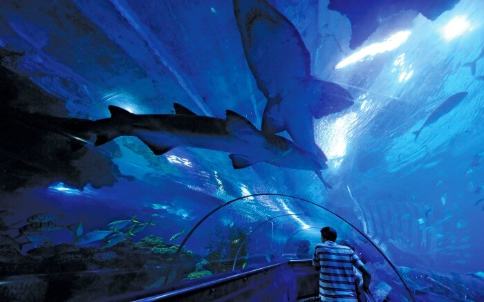 Underwater tunnel in Aquaria KLCC