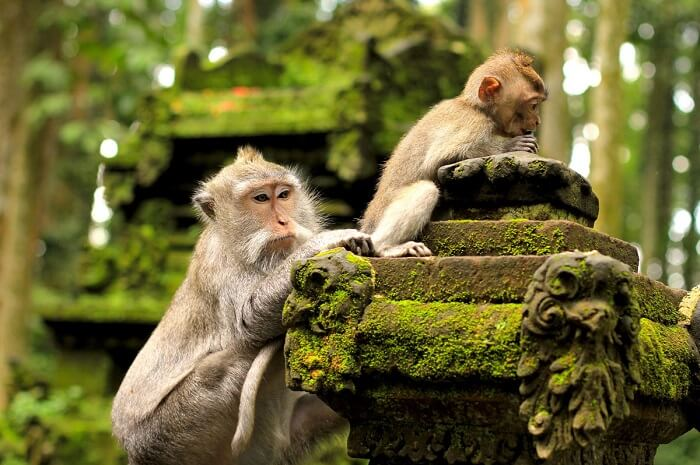 trek off to West Bali National Park