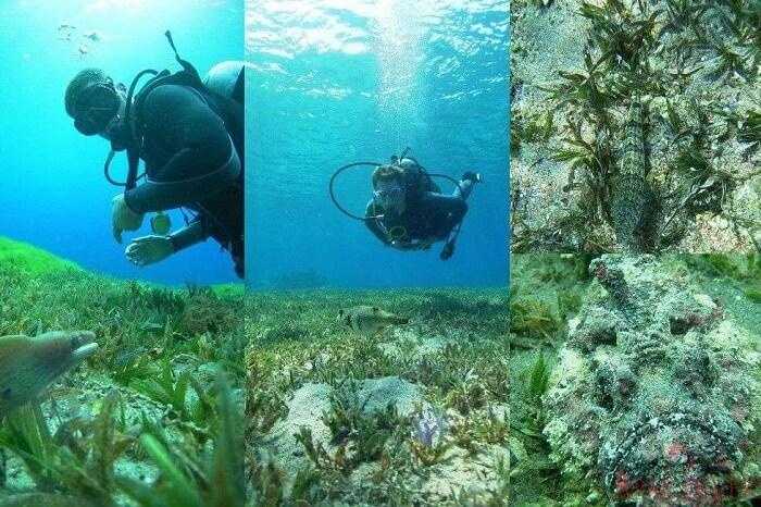 A traveler scuba diving at the Japanese garden corals in Aqaba