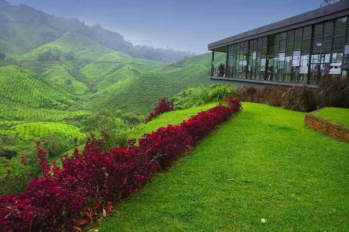 Observation deck at tea plantation in Cameron Highland in Malaysia