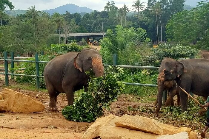 elephant sanctuaries in sri lanka