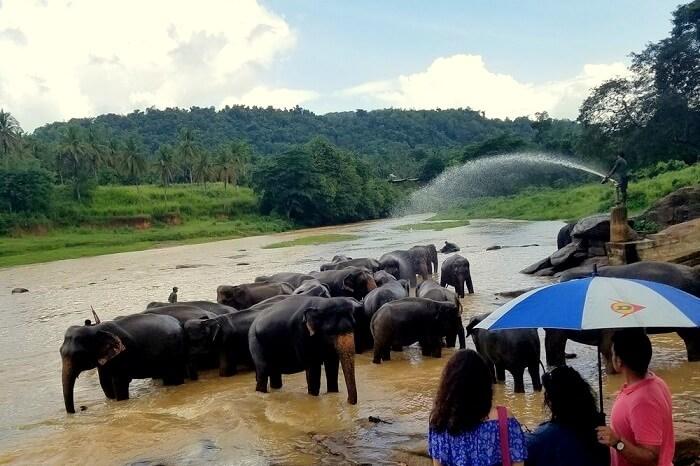 wildlife sanctuaries in Sri Lanka