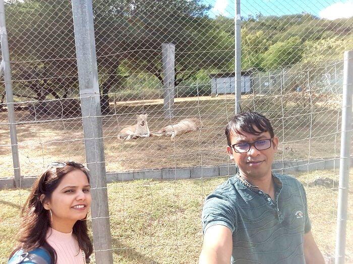 animals in casela nature park