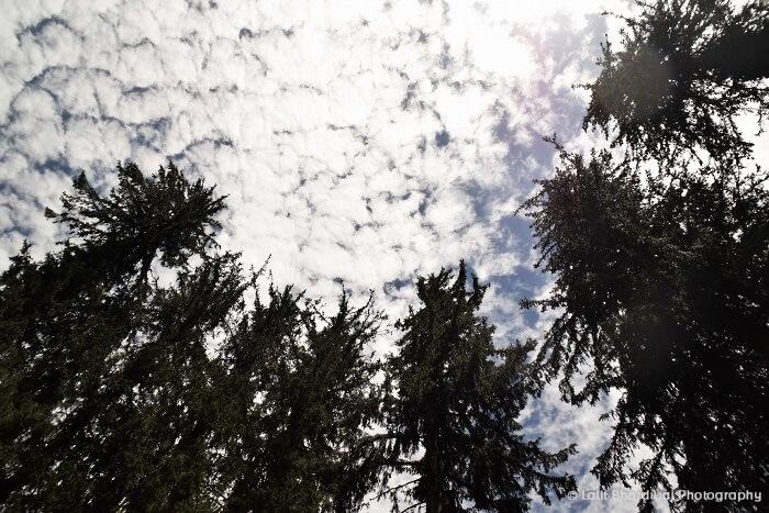 Sunny day in Kasol