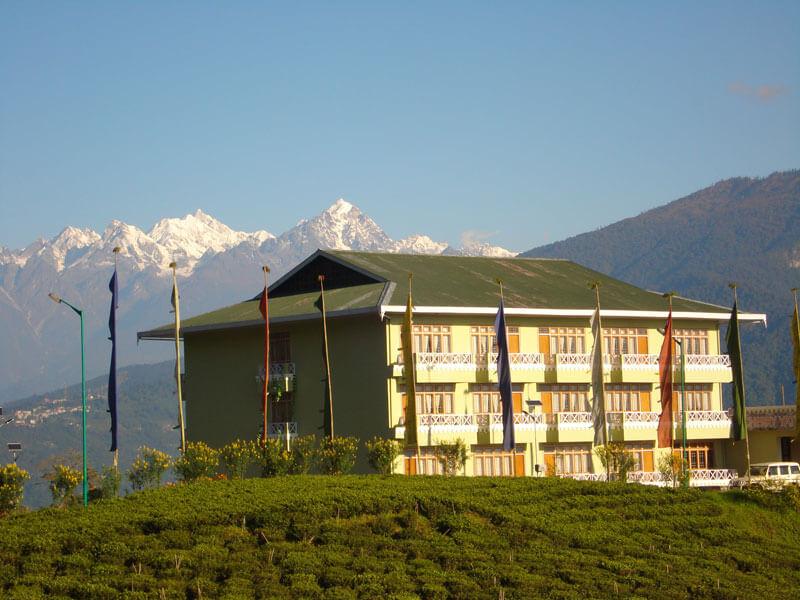 a green root resort amid tea gardens