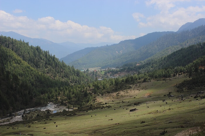 farms of bhutan