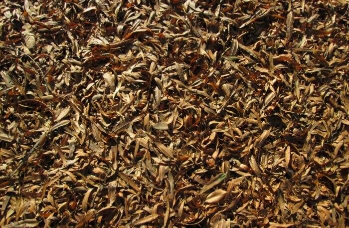Fertile Ground, Assam