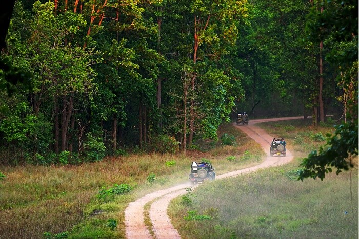 go on a safari on Gir Jungle Trail