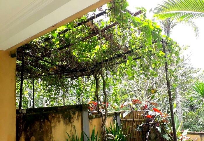 greenery in Bali
