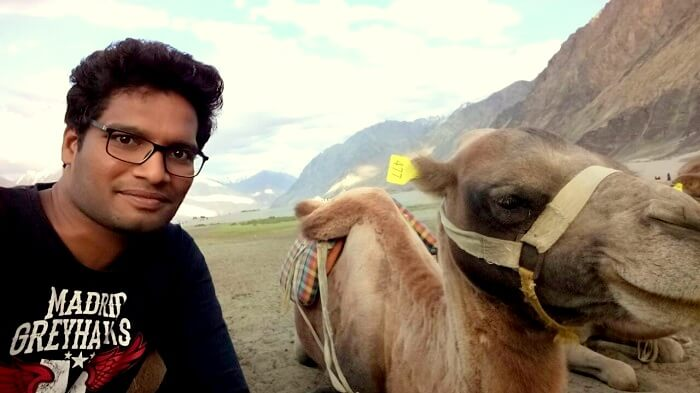 camels in ladakh