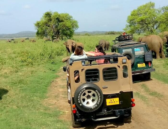 jungle safari in sigiriya