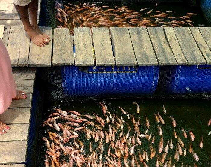 fish therapy in sri lanka