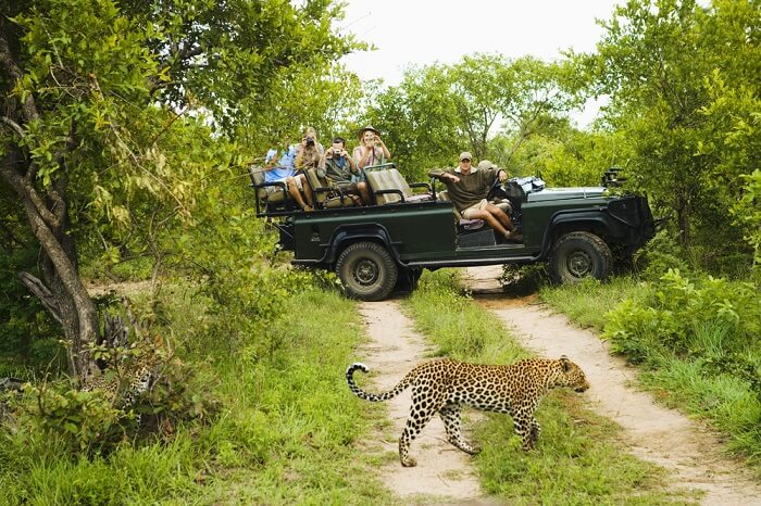 go on an adventurous kruger national park safari